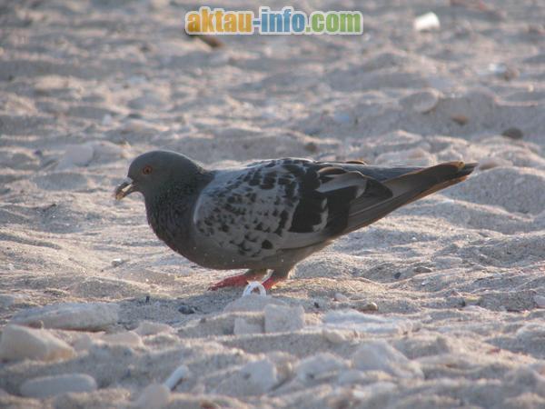 Птицы Каспийского побережья