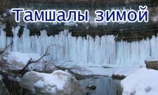 tamshali_zimoy