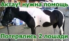 Потерялись 2 лошади