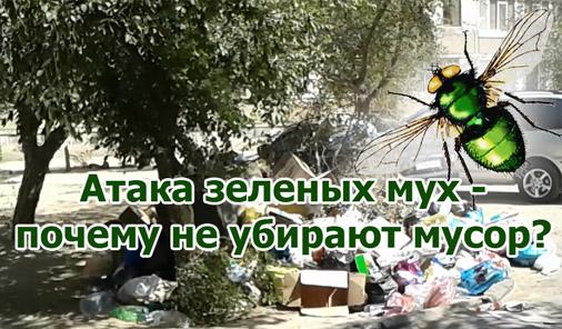 атака зеленых мух - почему не убирают мусор